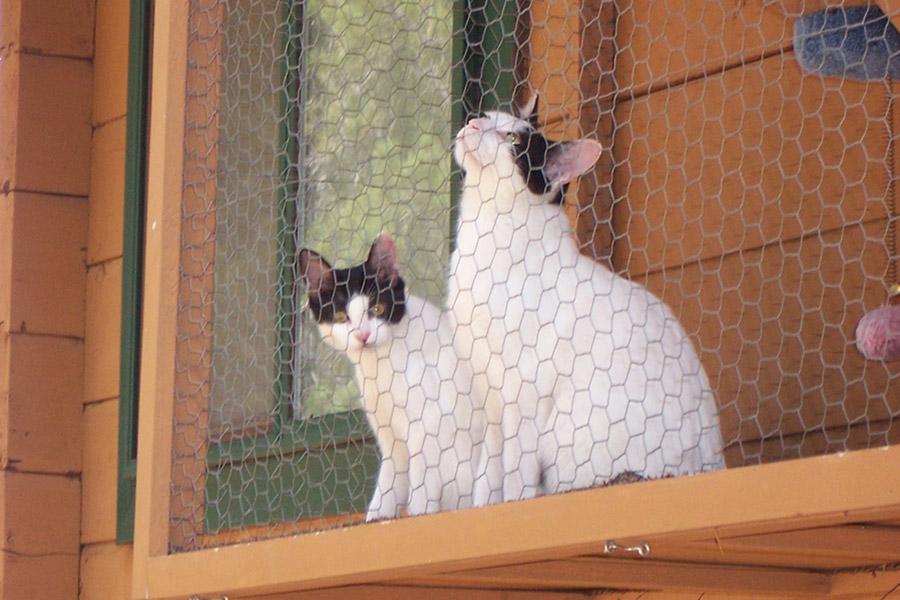 Cat Terrace